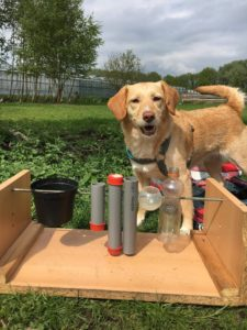 Hondenuitlaatservice Jolly Dog 5 jarig bestaan, hersenwerken