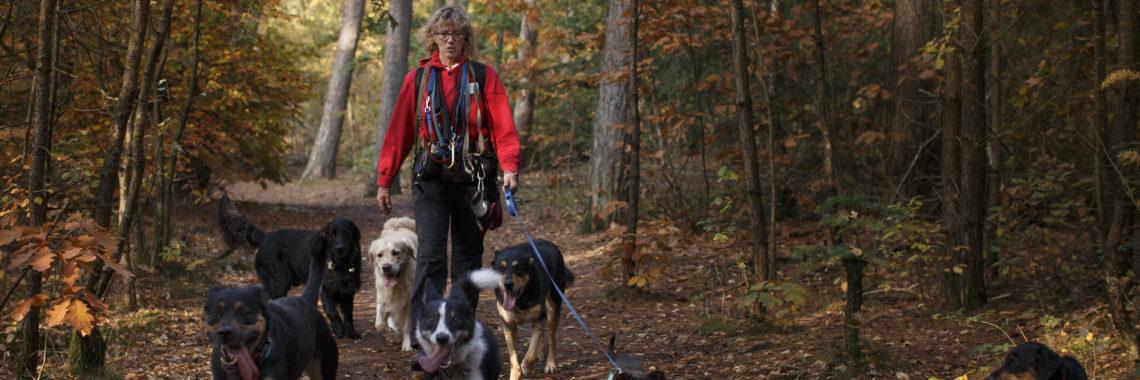 Hondenuitlaatservice Jolly Dog herfst