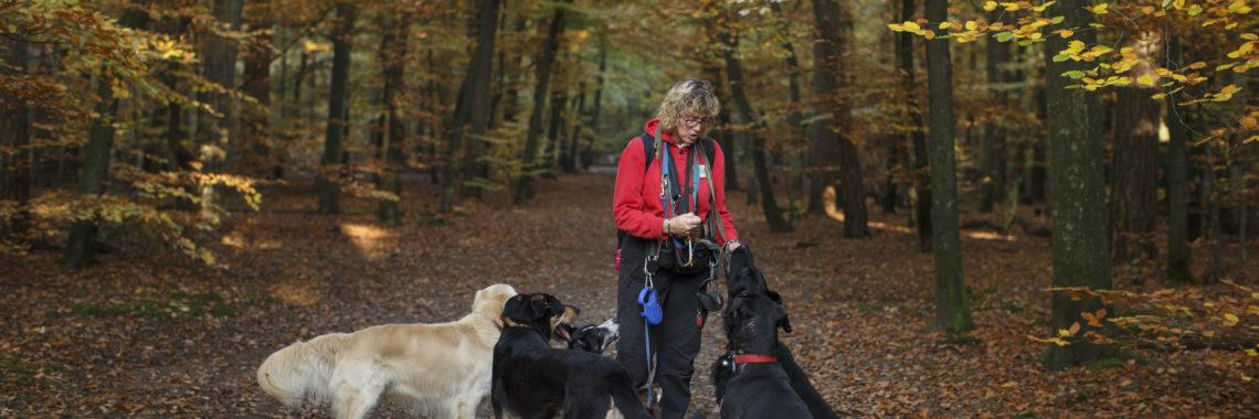 hondenuitlaatservice jolly dog herfstwandeling