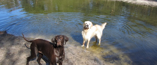 Hondenuitlaatservice Jolly Dog aan de waterkant