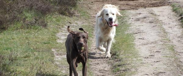 Hondenuitlaatservice Jolly Dog Rennen op de heide