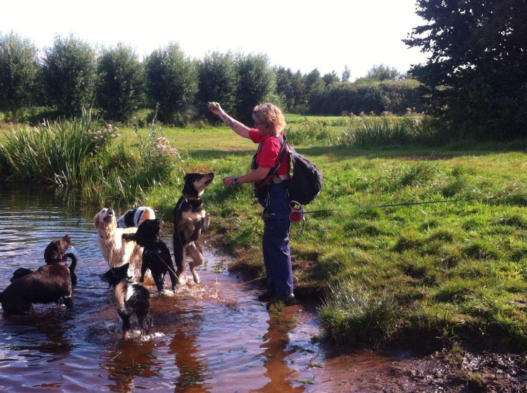 onderweg met Hondenuitlaatservice Jolly Dog