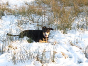 jolly dog sneeuw wintertips